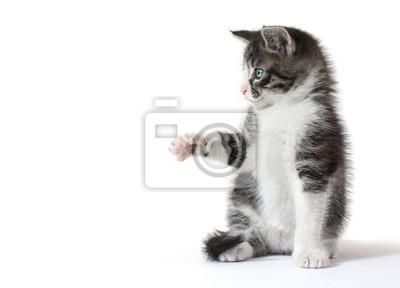 Ein kleines Kätzchen, etwas zu fangen