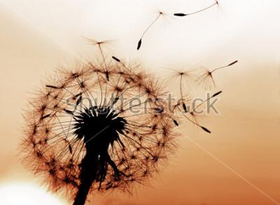 Sticker Ein Löwenzahn, der Samen im Wind durchbrennt.