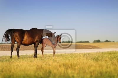 Ein Pferd mit einem Fohlen