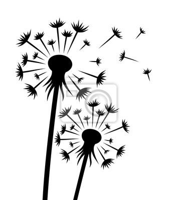 Eine Blume eines Feldlöwenzahns mit Samen.