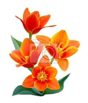 Eine Blume von Liliaceae Tulip Bouquet
