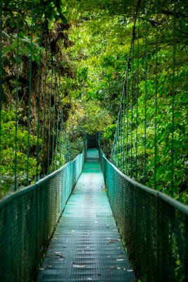 Sticker Eine Brücke im Regenwald