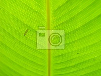 eine kleine Spinne auf Blatt