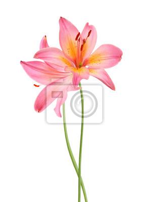 Eine Lilienblume, die verziert