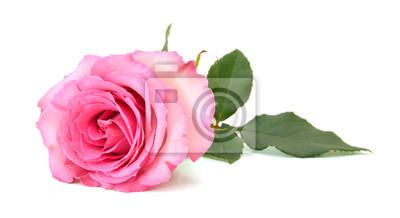 Eine rosa Rose, Muttertag