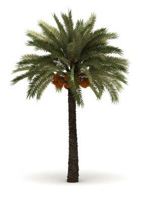 Sticker Einzel-Palme