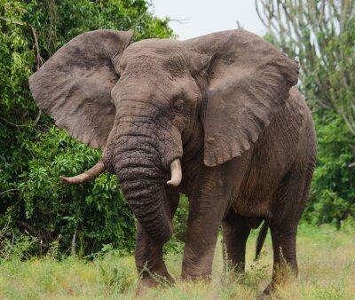 Sticker Elefanten in der Savanne. Schießen aus Heißluftballon. Afrika. Kenia. Tansania. Serengeti Maasai Mara. Eine ausgezeichnete Illustration.