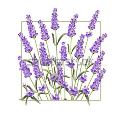Sticker Elegante Karte mit Lavendelblumen. Der Lavendelrechteckrahmen und der Text Sommer. Lavendelrand für Ihre Textdarstellung. Vektor-illustration