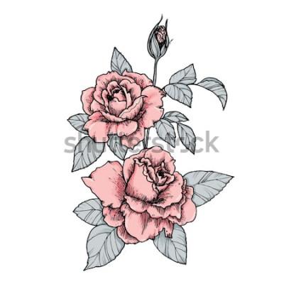 Sticker Elegante Vignette mit rosa Rosen. Hand gezeichnete lokalisierte Vektorillustration in der Weinleseart