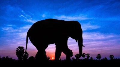 Sticker Elephant andpPalm Baum auf der Dämmerung der Zeit