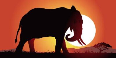 Sticker Elephant-couche de soleil