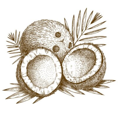Sticker engraving  illustration of coconut and palm leaf