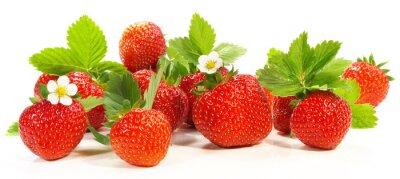 Sticker Erdbeeren - Panorama