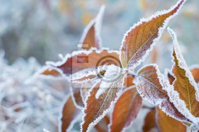 Sticker erster Frost und gefrorene Blätter