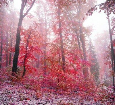 Sticker Erster Schnee im Herbst