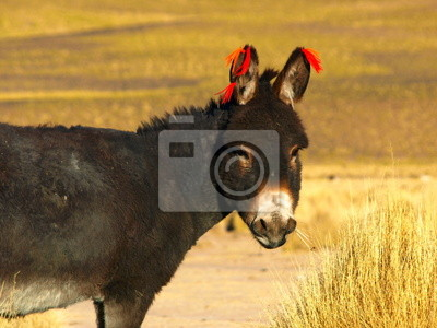 Sticker Esel