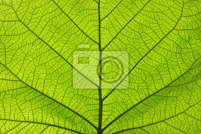 Sticker Extreme close up texture of green leaf veins