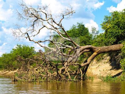 Sticker Fallen Baum am Amazonas-Fluss Bucht
