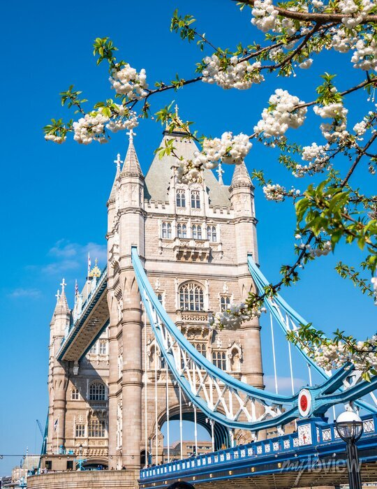 Sticker Famous landmark of London Tower Bridge in spring season with white apple tree flowers in composition - England, United Kingdom