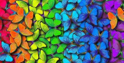 Sticker Farben des Regenbogens. Muster des mehrfarbigen Schmetterlinges morpho, Beschaffenheitshintergrund.