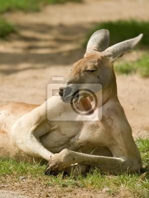 Sticker Faule Känguru mit fast menschliche Haltung