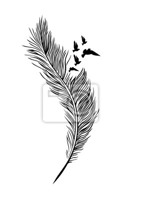 Feather Illustration, Feather and Flying Bird Birds, Wall Design, Wall Decals, Art Design. Feather Flying Birds Silhouette isolated on white background. You can use as wall decal, t-shirt design..