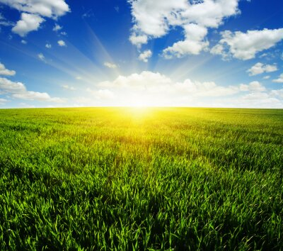 Sticker Feld und Sonne