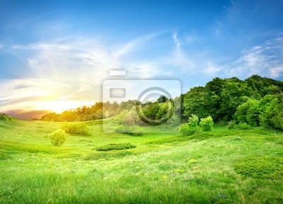 Feld und Wald in der Nähe von