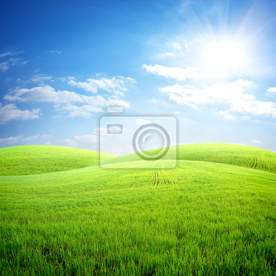 Feld von frischem Gras
