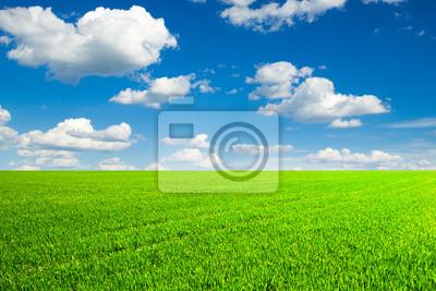 Feld von Gras