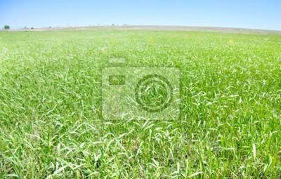 Feld von Gras und Himmel