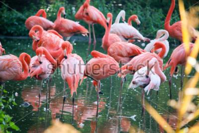 Sticker flamingo on the pond