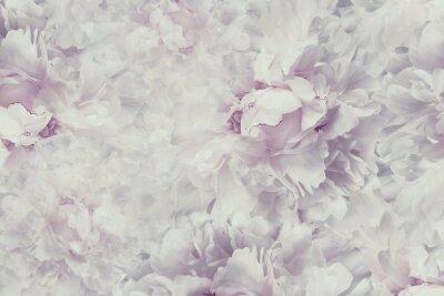 Sticker Floral Jahrgang schönen Hintergrund. Wallpapers von Blumen hellrosa-weiße Pfingstrose. Blütenzusammensetzung. Nahansicht. Natur.