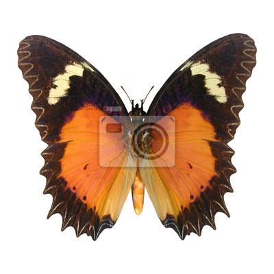 Florfliege Schmetterling