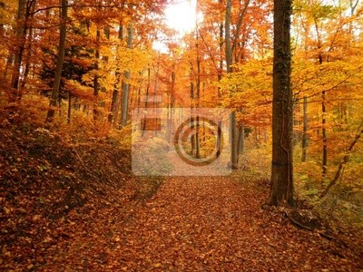 Forest Trail Während Herbst