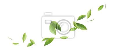 Sticker Fresh green citrus leaves on white background