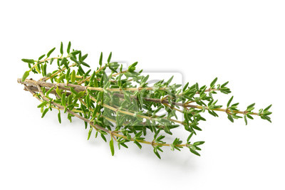 Sticker Fresh thyme sprigs isolated on white.