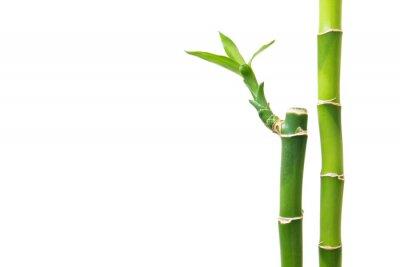 Sticker Frischer Bambus isoliert auf weißem Hintergrund