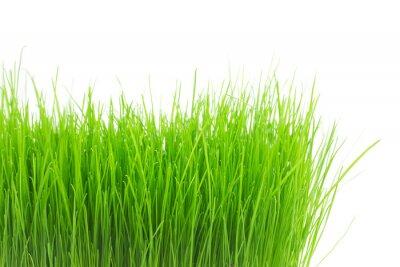 Sticker Frisches grünes Gras