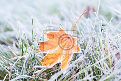 Sticker Frost auf dem Blatt und Gras.