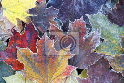 Sticker frost colorful leaves in the cold morning as nature background