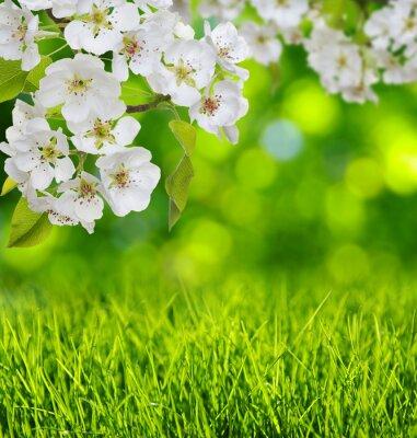 Sticker Frühling blühen und Gras
