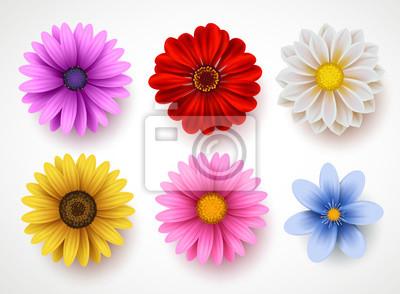 Sticker Frühling blüht den bunten Vektorsatz, der im weißen Hintergrund lokalisiert wird. Sammlung des Gänseblümchens und der Sonnenblumen mit verschiedenen Farben für Frühlings-Saison als grafische Elemente