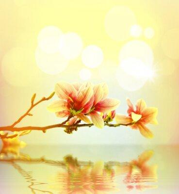 Sticker Frühlingsblume magnolia Hintergrund