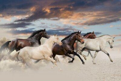 Fünf Pferd laufen Galopp in der Wüste bei Sonnenuntergang