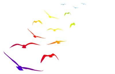 Sticker Gabbiani, volare, volo, arcobaleno, pace