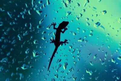 Sticker Gecko auf Glasfenster Wet mit Regen fällt