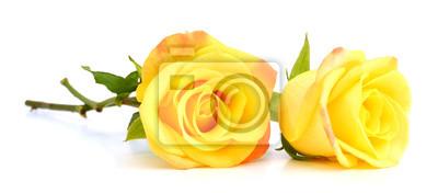 gelbe Rosen isoliert auf weißem Hintergrund