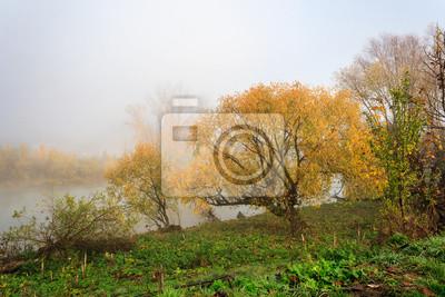 gelben Baum im dichten Nebel auf Herbst Böschung