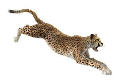 Sticker Gepard